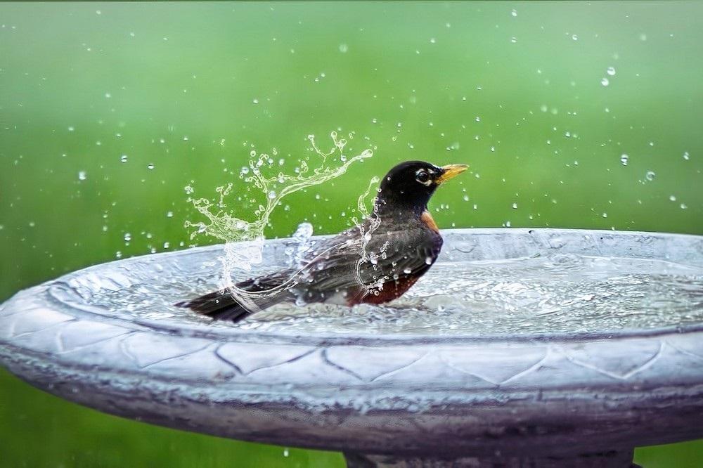 Zo trek je meer vogels aan in je tui
