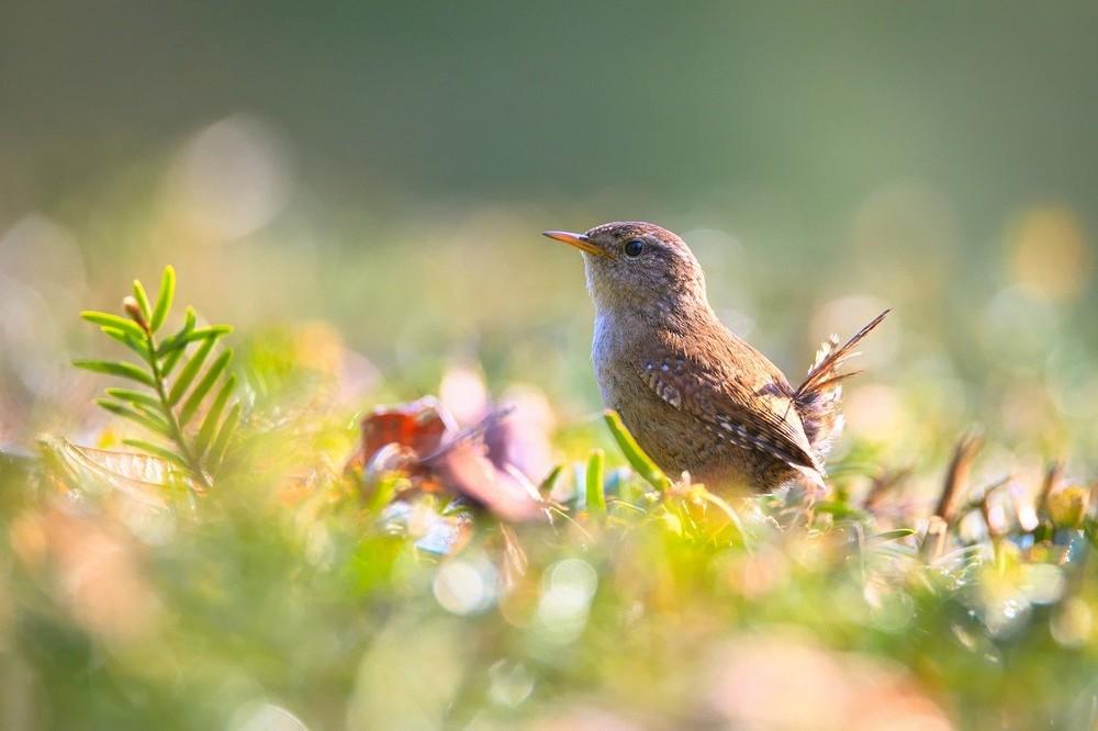 Zo trek je meer vogels aan in je tuin