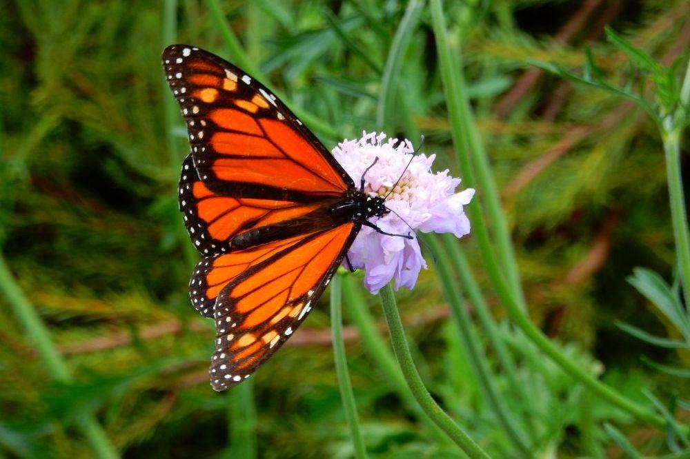 Ecologisch verantwoord aanleggen en onderhouden van je tuin