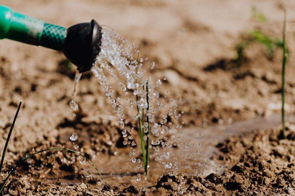 Water sparen en vergaren in de tui