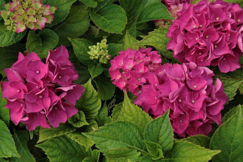 Welke kleurrijke planten in de tuin zijn écht nuttig