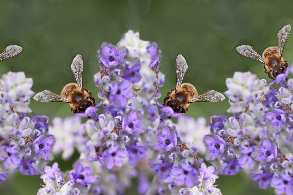 Zo leg je een bijenvriendelijke tuin aa