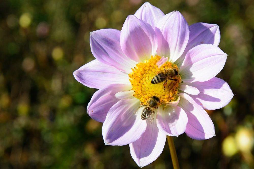 Zo leg je een bijenvriendelijke tuin aan
